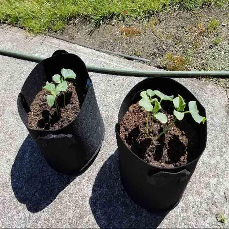 grow bag gardening 4